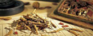 Сокровище китайской медицины: какие болезни лечат кордицепсом