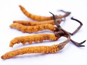 Китайский гриб Кордицепс