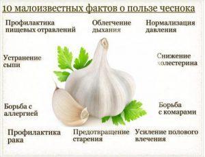 Чеснок для потенции: польза чеснока для мужского организма в любом возрасте