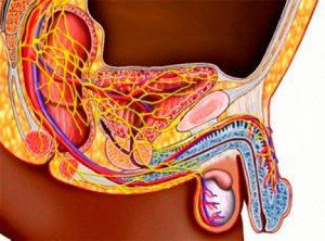 Симптомы простатита снижают качество жизни мужчины