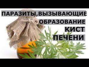 Киста печени - лечение народными средствами